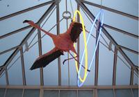 PARADISE ROW PRESENTS ARTIST SHEZAD DAWOOD: THE JEWELS OF APTOR